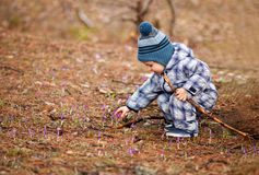 Picking first spring flowers Stock Photography