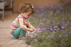 Picking flowers from the garden Stock Image