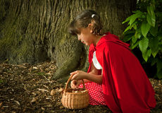 Picking fungi in the forest. Little red riding hood picking mushrooms or fungi in the forest royalty free stock photos
