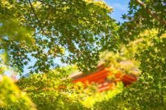 Picking through green maple leaves to a beautiful historic buildings blurred in the background at Kiyomizu Temple in Kyoto. Picking through green maple leaves stock images