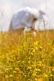 Picking herbs Stock Photo