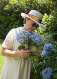 Picking Hydrangeas in the Gard Royalty Free Stock Photos