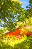 Picking through the leaves at golden hour to a historic building in Kyoto. Picking through the leaves at golden hour with one of the beautiful historic royalty free stock photo