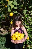 Picking lemons. Young girl smiling with dimple while she holds a basket full of lemons under the lemon tree Royalty Free Stock Photos