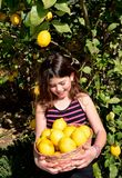 Picking lemons Royalty Free Stock Photo