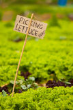 Picking Lettuce Here Signage Stock Photos