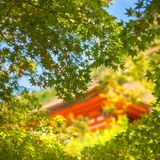 Picking through maple leaves at golden hour to a colorful building at Kiyomizu temple. Picking through maple leaves at golden hour with one of the colorful royalty free stock image