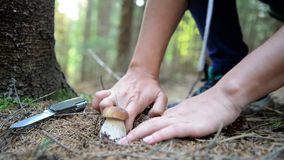 Picking mushrooms in forest stock footage