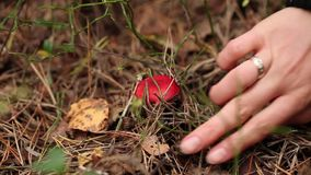 Picking mushrooms in the forest stock footage