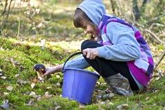 Picking mushrooms Stock Image