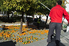 Picking oranges in the street 9. These are people picking oranges in the street Stock Photography