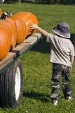 Picking out the best. Young boy trying to pick out the best pumpkin on a wagon Stock Photos