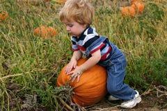Picking a Pumpkin Stock Image