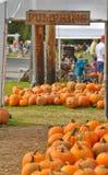 Picking a pumpkin stock images