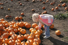 Picking Pumpkins. A child chooses a pumpkin Royalty Free Stock Photography