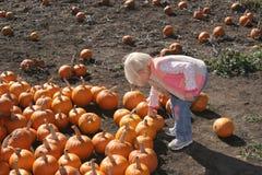 Picking Pumpkins Royalty Free Stock Photography