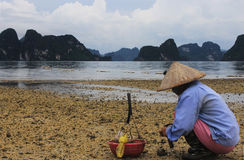 Picking seafood 2. Woman picking seafood in Halong bay, vietnam Stock Photography
