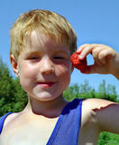 Picking Strawberries Ontario Canada. Boy enjoys a strawberry on his farm stock images