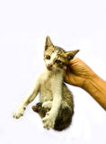 Picking a stray cat Stock Photography