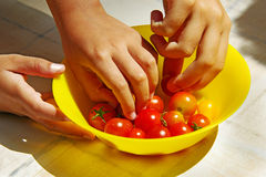 Picking tomatoes Stock Photos