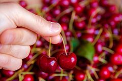 Picking two cherries Royalty Free Stock Image