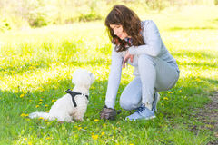 Picking up dog poop. Owner cleaning up after the dog with plastic bag royalty free stock photography