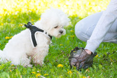 Picking up dog poop Royalty Free Stock Images
