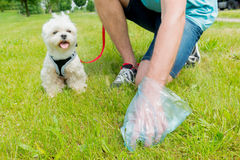 Picking up dog poop. Owner cleaning up after the dog with plastic bag Stock Photo