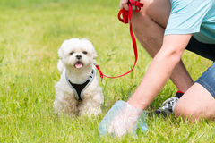 Picking up dog poop Stock Images