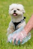 Picking up dog poop Royalty Free Stock Photo