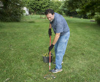 Picking Up Fallen Walnuts In The Grass Stock Photo