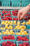 Picking Up Fruits by the Quart at Farmer's Market. Customer grabs mixed quart of yellow cherries and blueberries for sale at a farmer's market Royalty Free Stock Photos
