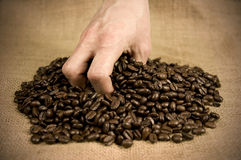 Picking up a hand full of coffee beans Royalty Free Stock Photo