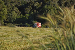 Picking up triticale. Feed Wagon collecting a mown triticale crop that was grown for silage, West Coast, New Zealand Royalty Free Stock Images
