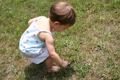 Picking weeds. Baby girl in field picking weeds. Shot with Canon 20D Royalty Free Stock Photos