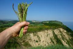 Picking wild asparagus Royalty Free Stock Image