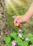 Picking wild flowers Royalty Free Stock Image