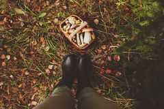 picking wild mushrooms in autumn forest Royalty Free Stock Photos