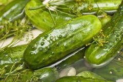 Pickle à l'aneth frais fait maison Photo stock