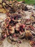 Pickle crab shellfish Thai food Royalty Free Stock Image