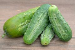 Pickle cucumber Royalty Free Stock Image