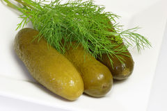Pickle and dill herbs Royalty Free Stock Photo