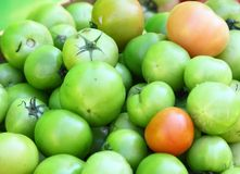 Pickle green tomatoes in a big supermarket Royalty Free Stock Images