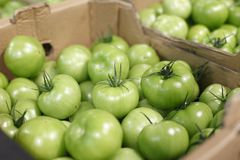 Pickle green tomatoes in a supermerket Stock Photos