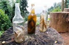 Pickle snake Stock Image