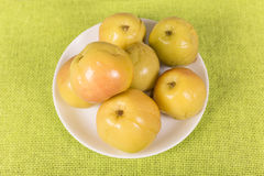Pickled apples Stock Images