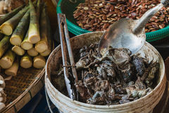 The pickled bullfrog for sell in the market. At Chainart, Thailand royalty free stock image