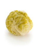 Pickled Cabbage Stock Images