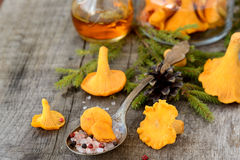 Pickled chanterelle mushrooms Stock Photos
