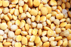 Pickled chickpeas and lupin beans stock image